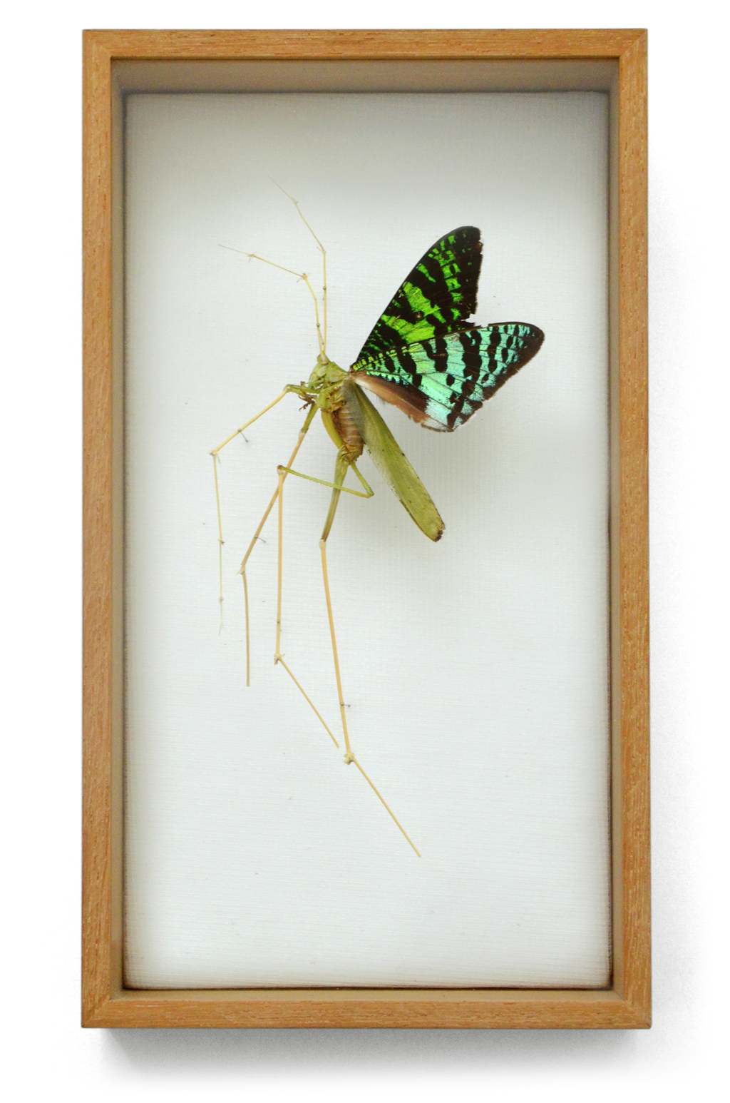 """Carnival"" is a grashopper that dressed up like a butterfly. He got a pair of wings and high heels made from flower twigs. (w:14 h:25 d:5.5 cm)"