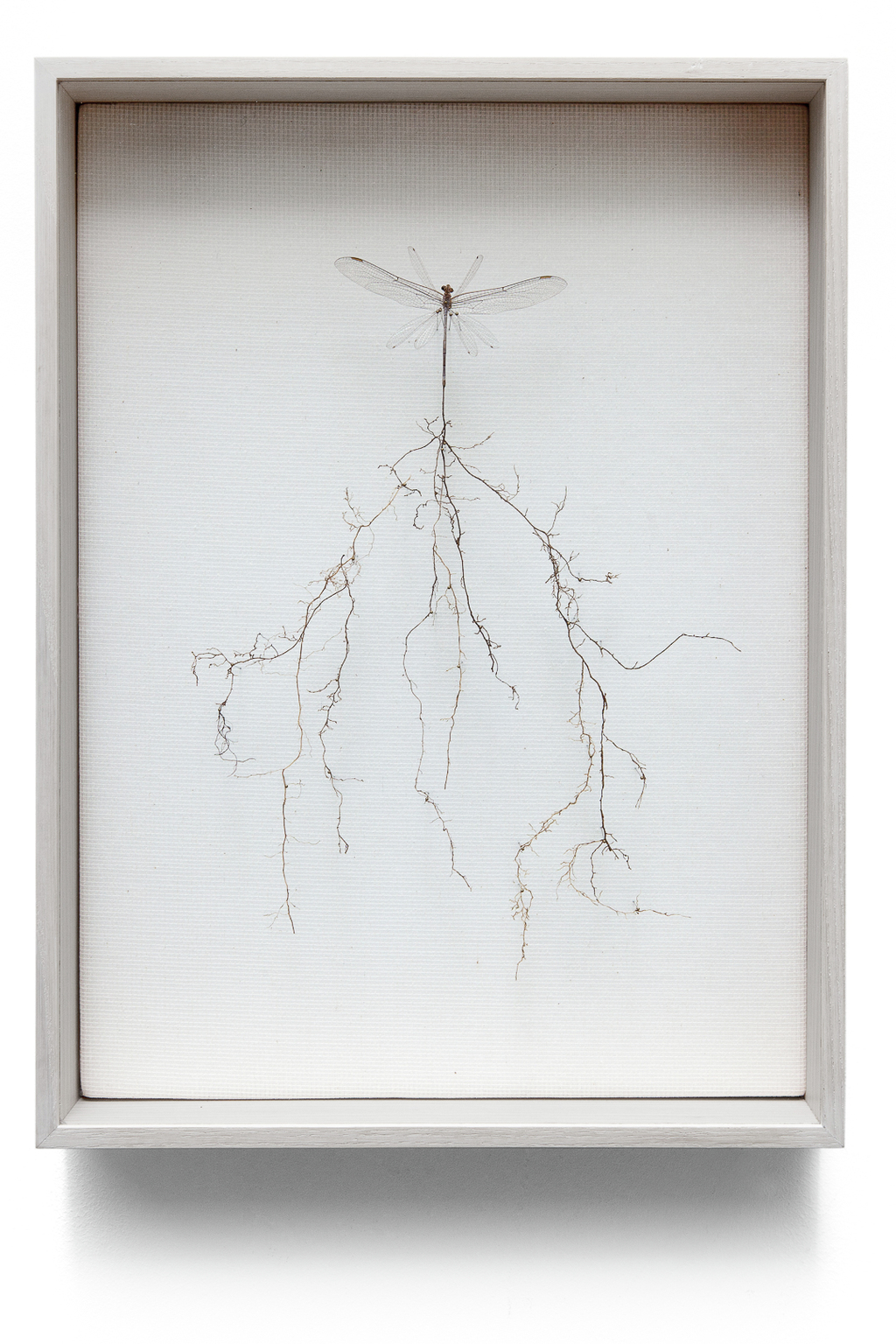 """Root fly"" received roots to keep in contact with the earth. (w:26 h:35 d:5.5cm)"