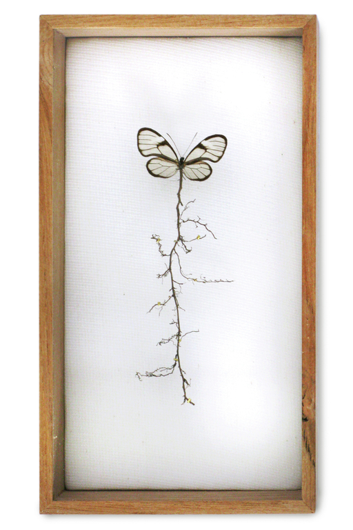 """Golden root butterfly"". This butterfly was missing its body and I added the plant root to recreate the butterfly's torso. <br> The root symbolizes an umbilical cord to the earth. (w:14 h:25 d:5.5 cm)"